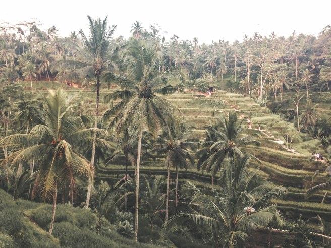 Bali (85)